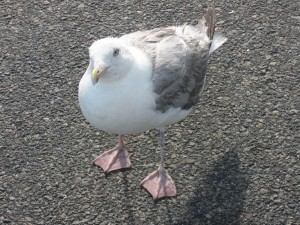 "Seagull wondering why humans are ""so busy"""